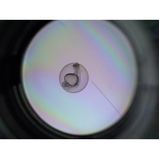 Cellfish embryo_on_the_path